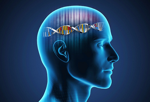 A new study led by researchers at @BostonChildrens, @BrighamWomens, and @harvardmed point to new areas for exploring the genetics of #autism spectrum disorder and could eventually inform diagnostic testing.Learn more: