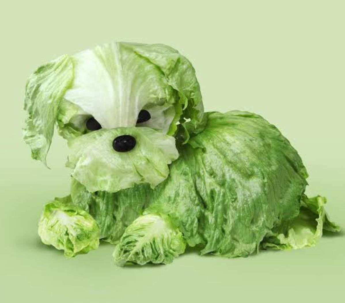 Lettuce is a healthy source of choline, a nutrient crucial to the health of your brain that plays an important role in memory function.  #healthyeating #healthyfood #superfood #healthyliving #healthylifestyle #healthy #brainhealth https://t.co/9GywgyIyWe