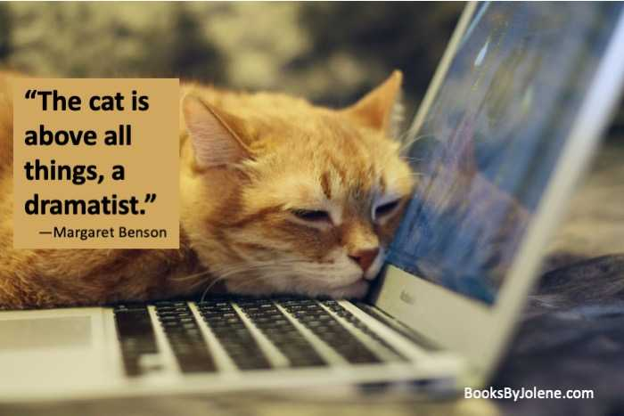 This is why my cat is such a great writing buddy. She inspires me! #CatsOfTwitter #Cats #Caturday #amwriting #writingtip #writingcommunity #writerslife #writing