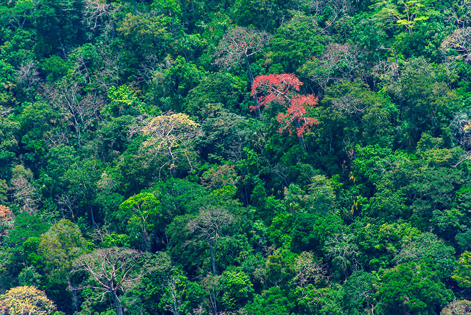 Smithsonian scientists reduce uncertainty in forest carbon storage calculations #smithsonian #scientists #carbon #science #newspaper  Read more about this here: