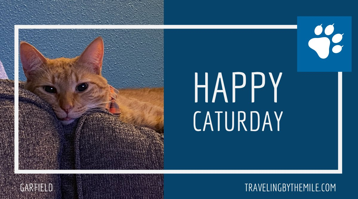 This week's #caturday post is a simple, sleepy photo featuring Garfield on the couch. He always seems so comfortable up there. #tbtmBASECAMP #tbtmCATURDAY