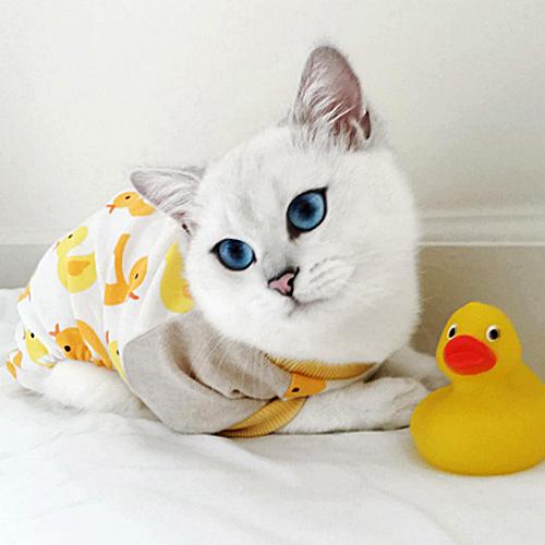 #Caturday:  #Pajamas #PajamaParty #PJs #Sleepy #Cat #Cats #CatsInCostumes #BritishShorthairCat - Photo by colbythecat