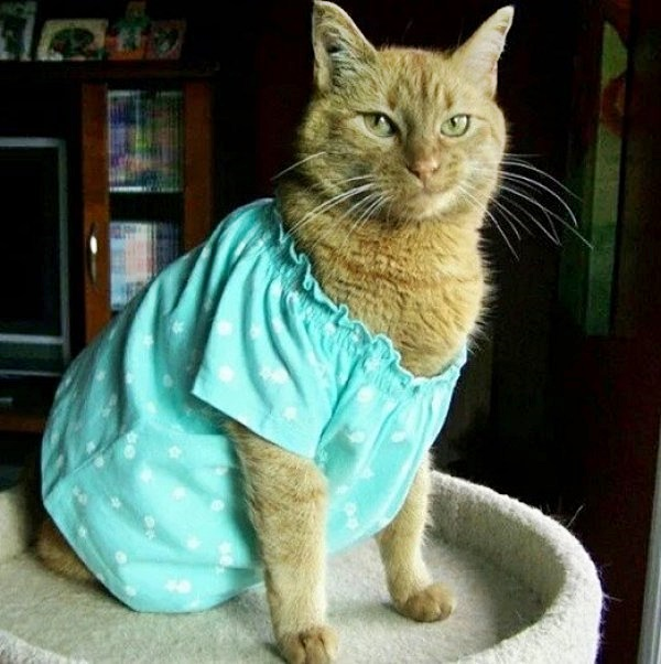 #Caturday:  #Pajamas #PajamaParty #PJs #Sleepy #Cat #Cats #CatsInCostumes #GingerCat #NightGown
