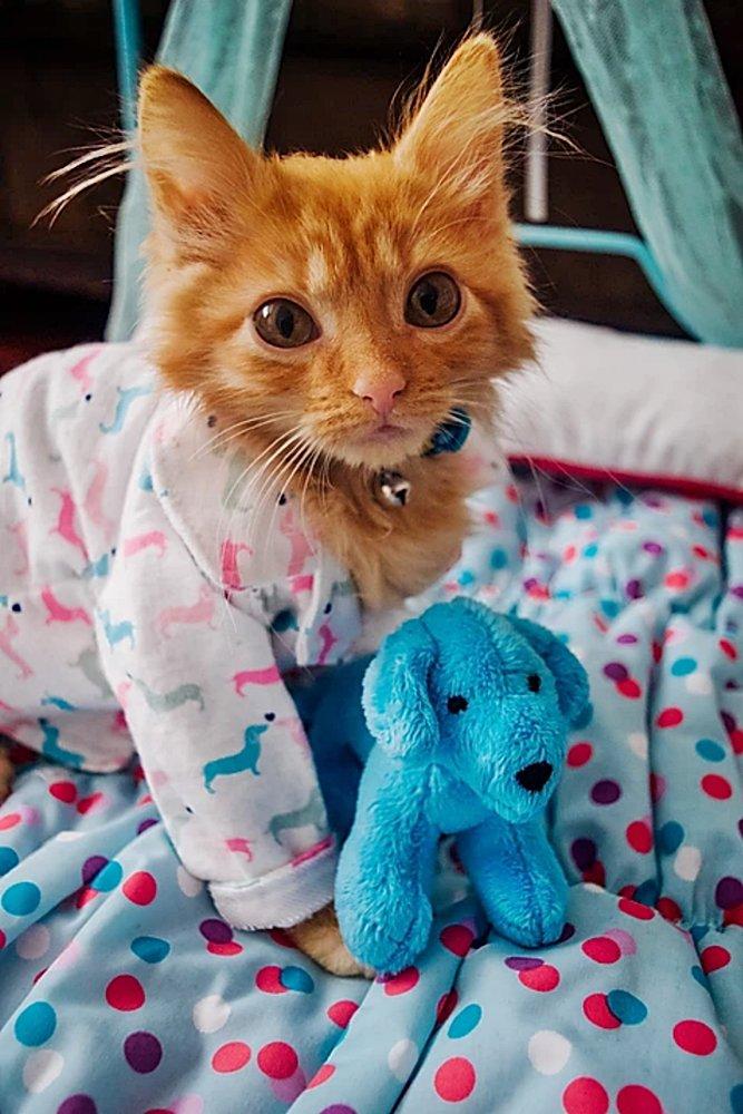 #Caturday:  #Pajamas #PajamaParty #PJs #Sleepy #Cat #Cats #CatsInCostumes #GingerCat #Kitten