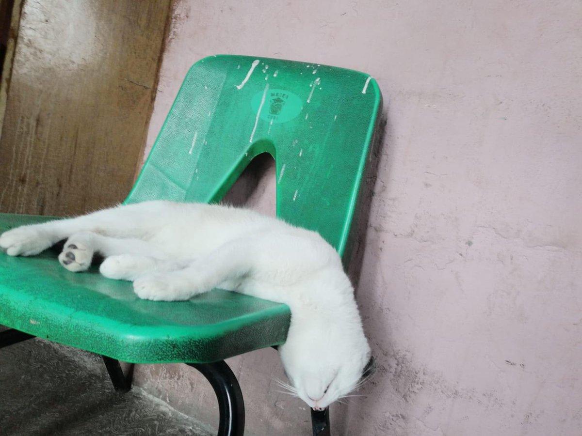 @ivannieblas #Caturday