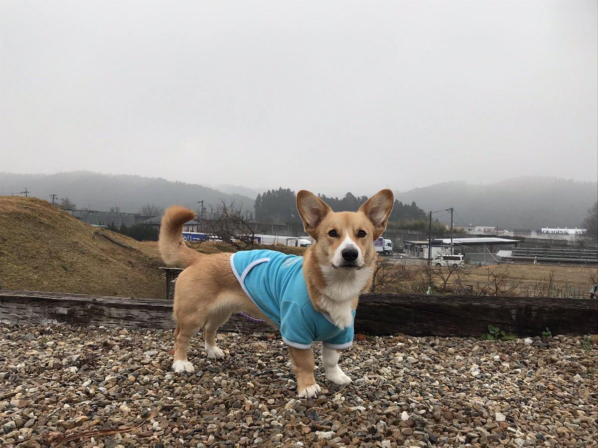 おはようございます!霧の恵那です🌁気温は−1℃と冷え込みは弱いです。今日はスッキリしない一日になりそう😰今朝は、気持ち良く初朝練してきました💨今日は阪神淡路大震災から、26年。多くの亡くなられて皆さんのご冥福をお祈りします🙏 https://t.co/JXReHwPbiN