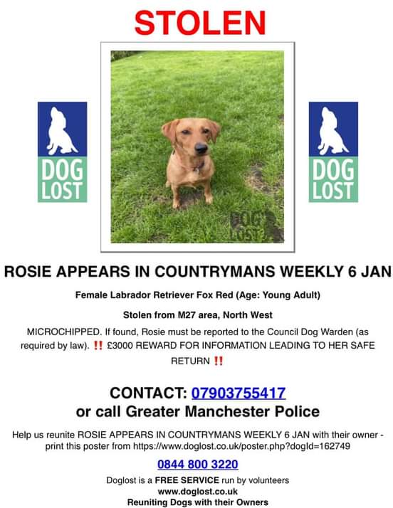 🐾❤️🐾 38 DAYS ON & ROSIE IS STILL MISSING 🐾❤️🐾  Despite intensive postering, leaflet distribution, social media appeals and even press articles, we are still no closer to finding Rosie and bringing her back home, where she belongs #NorthWest #M27 area #Rosie PLZ RT 🐕🐕🐕🐾🐾
