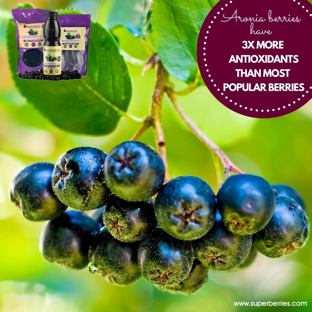 #Superberries #Aroniaberry (also known as a #chokeberry) has proven to be one of nature's most powerful #antioxidants. Antioxidants are a chemical compound or substances in foods, which protect the body's cells from the damaging effects of oxidation. https://t.co/ZxPzA9LH9I https://t.co/ECjwQLErGS