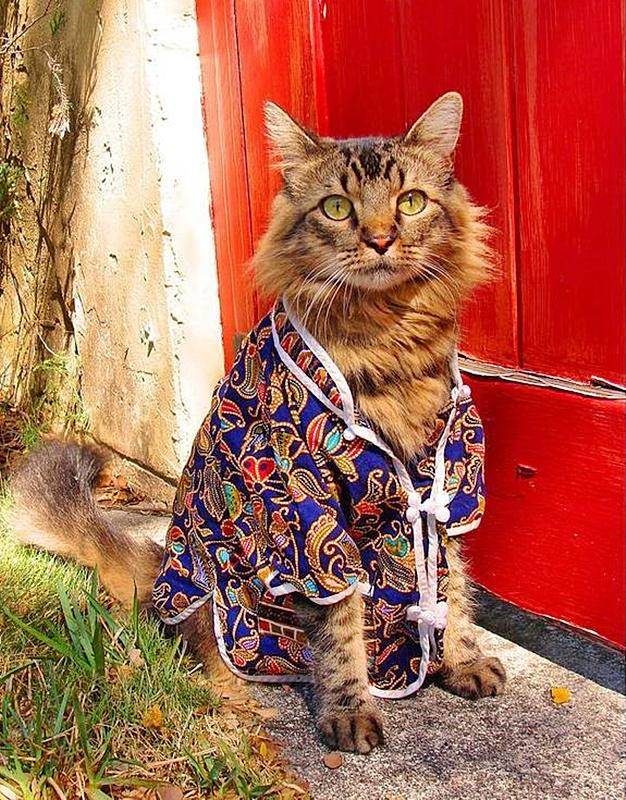 #Caturday:  #Pajamas #PajamaParty #PJs #Sleepy #Cat #Cats #CatsInCostumes #TabbyCat - Photo by Joann Biondi