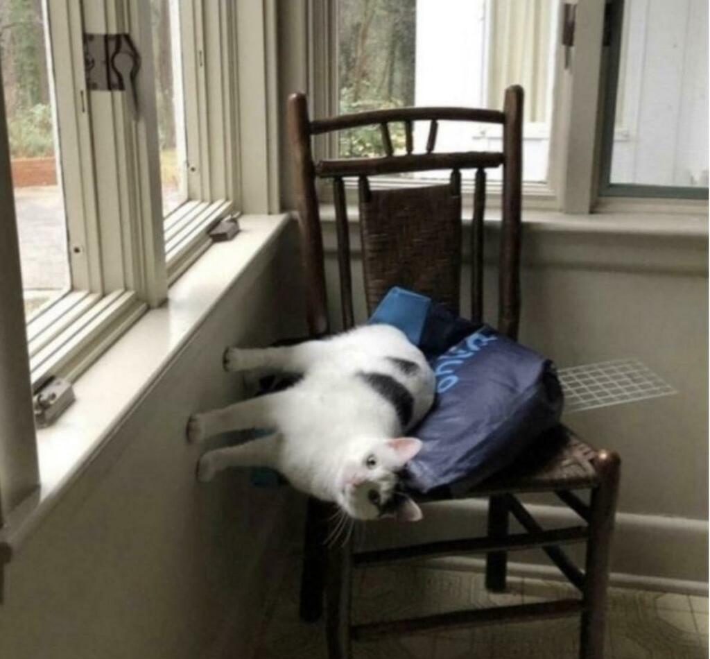 Cats do not observe the laws of physics—-or any laws for that matter via /r/funny  #funny #lol #haha #humor #lmao #lmfao #hilarious #laugh #laughing #fun #wacky #crazy #silly #witty #joke #jokes #joking #epic #funnypictures