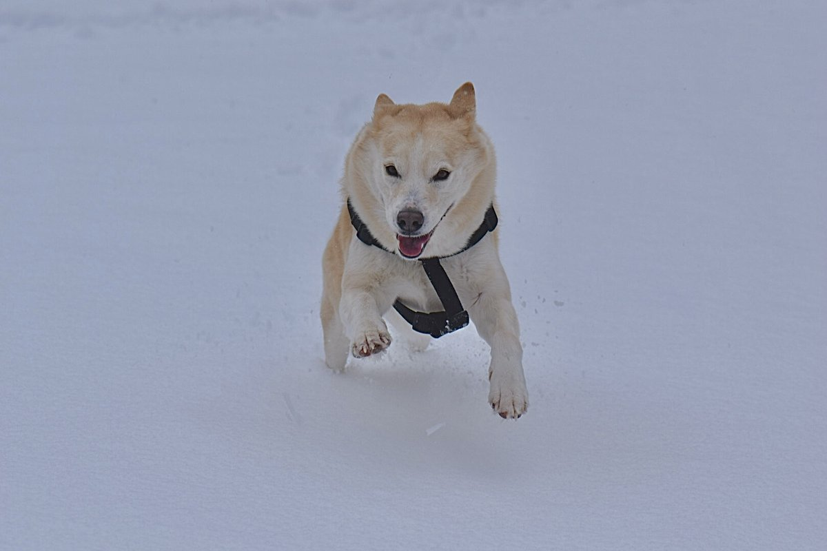 A  #dog who truly loves #winter