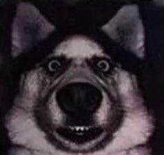 Best dog ever :) #dog