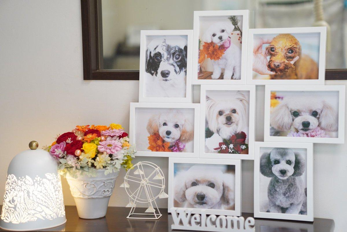 ドッグサロンアロマです 2020年12月からリニューアルオープンしました! よろしくお願いいたします💛  #ドッグサロン #アロマ #トリミング #かわいい #犬 #いいこ #dog #小岩 #江戸川 #新小岩 #葛飾 #デザイン #カット #ハーブパック #バブル