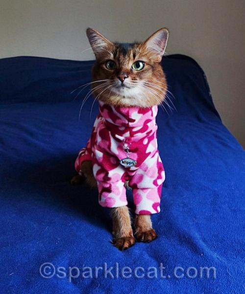 #Caturday:  #Pajamas #PajamaParty #PJs #Sleepy #Cat #Cats #CatsInCostumes #SomaliCat - Photo by Sparklecat