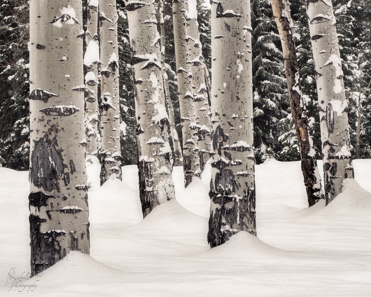 I took this one a few days ago near Moose, WY. #nature #naturephotography #naturelovers #nature_seekers #landscapephotography #landscape #landscape_lovers #landscapes #landscape_captures #optoutside #sonyalpha #canon #aspen #snow #winter #grandtetons #closeup #outside #outdoors