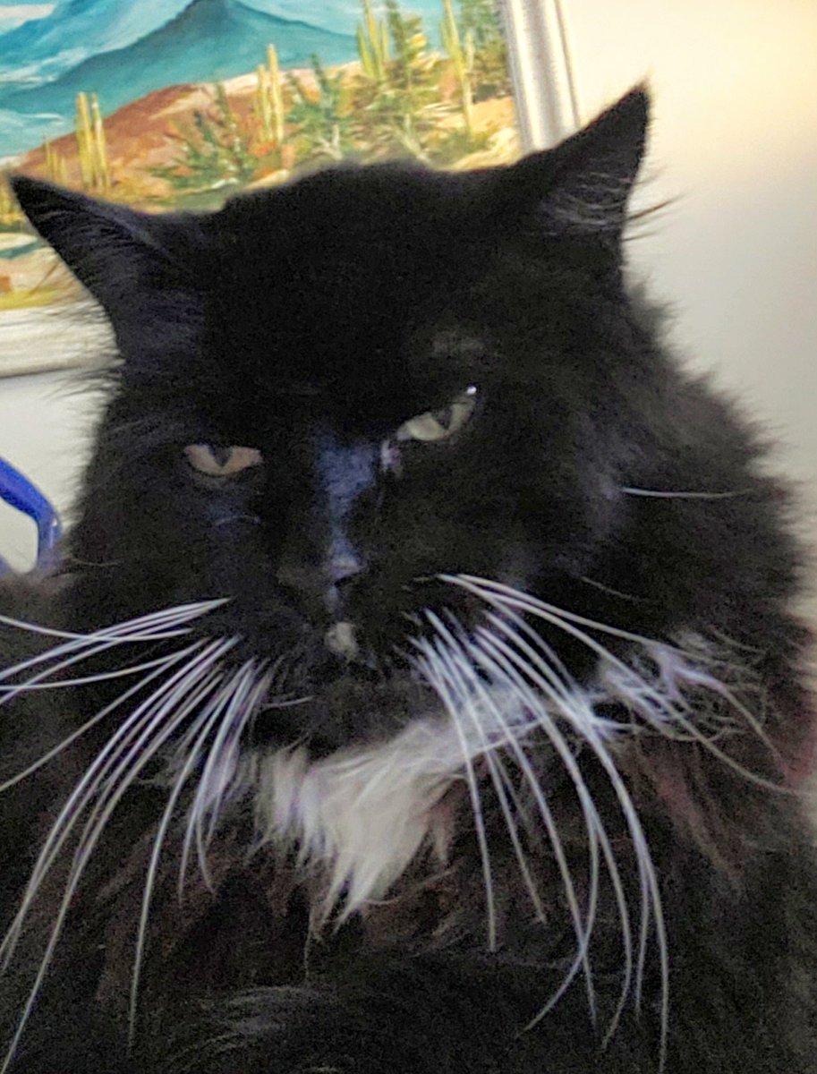 #catsjudgingkellyanne Bumblebee is not pleased with Kellyanne. At all.