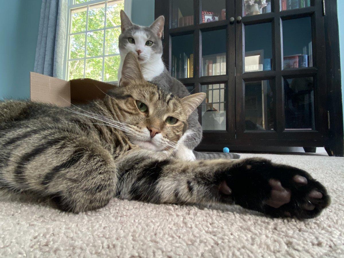 They know...😅🥰 #catsjudgingkellyanne