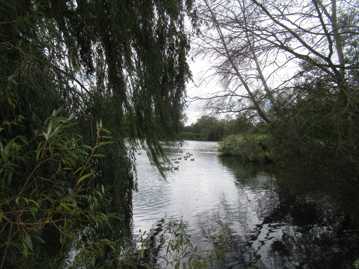 Lake #lake #water #trees #Buckinghamshire