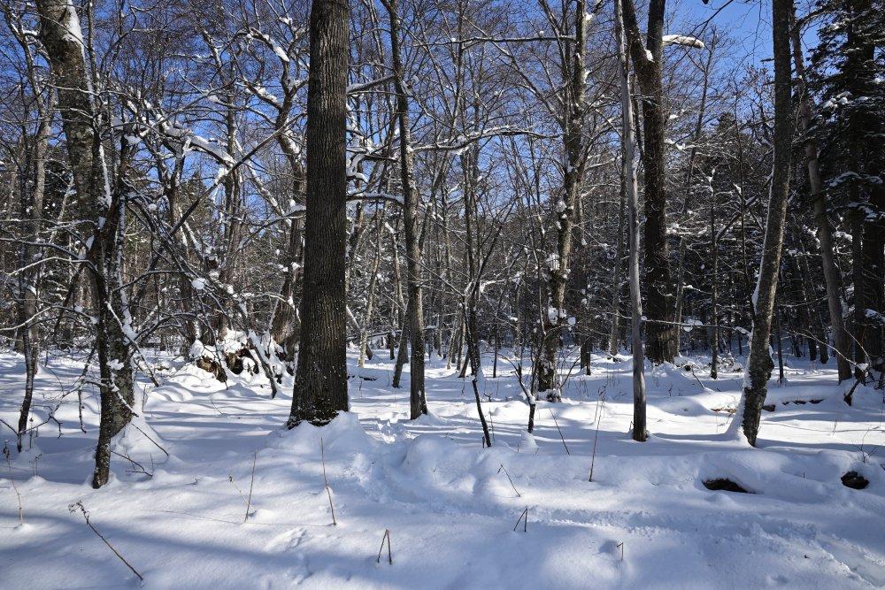スノートレッキング昨日の続きです強い風の後、青空が広がりました4枚目 雪山を作ってみました    気温が低いのでパサパサ状態です    何かを作るのはまだ無理です?     #北海道 #津別町 #チミケップの森 #スノートレッキング