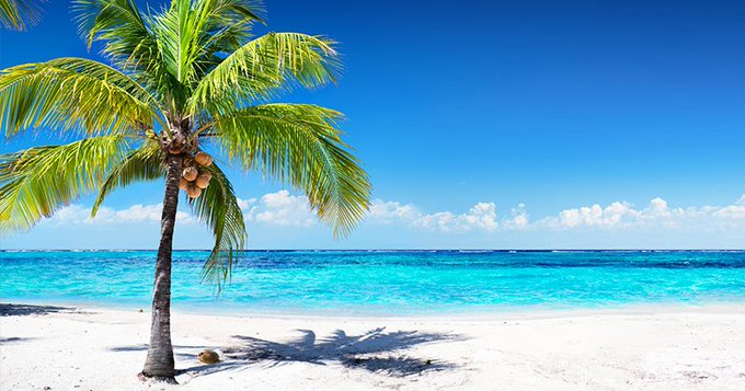 Pic of the Day…Treeing Around 🏝️   #travelphoto #beachlover #beach