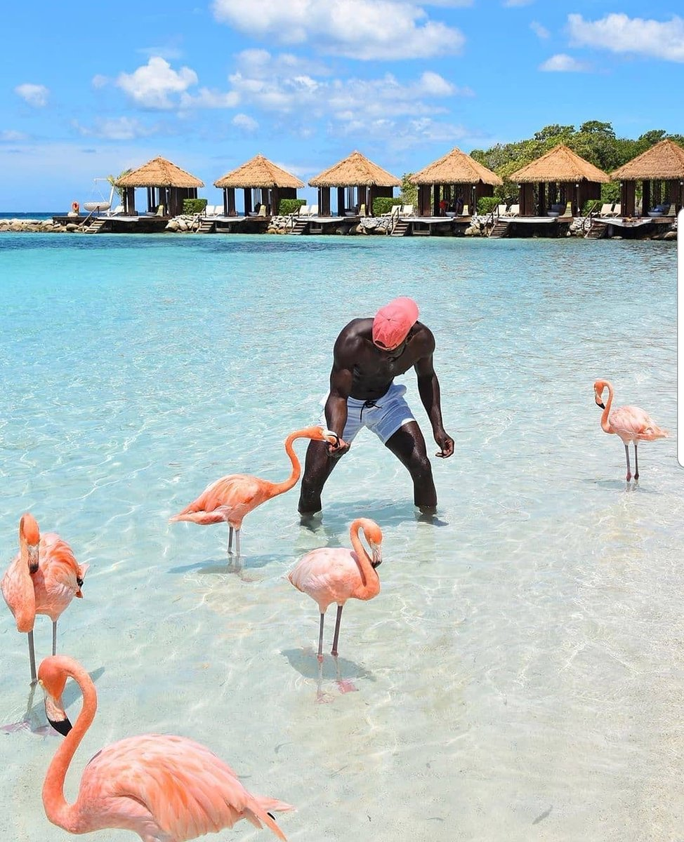 Playing with flamingos in Aruba, who would love to do this?  Follow @roadtrippers_t 📷jaidus  #summer #vacation #summertime #vacations #vacationmode #bestvacations #summerlove #instasummer #summerholidays #summercollection #summerlook