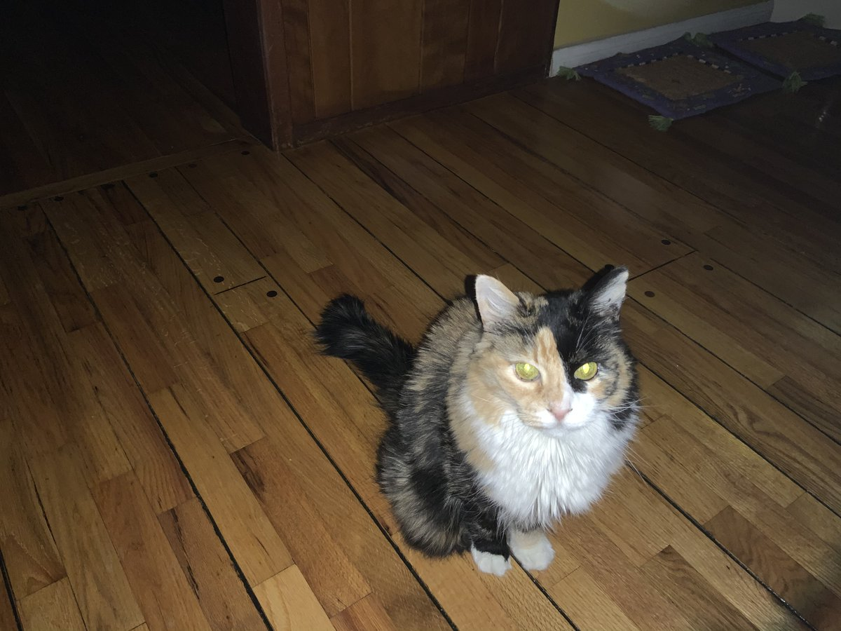 @cat_yawns @BitchestheCat @KellyannePolls #catsjudgingkellyanne @KellyannePolls