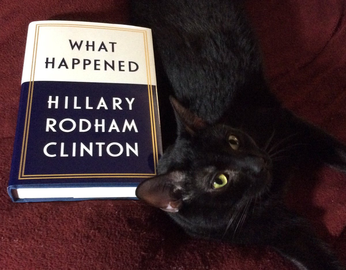 Stormie Knight is a true blue cat who can't wait for Tuesday either! #catsjudgingkellyanne #InaugurationDay #JoeBiden #KamalaHarris