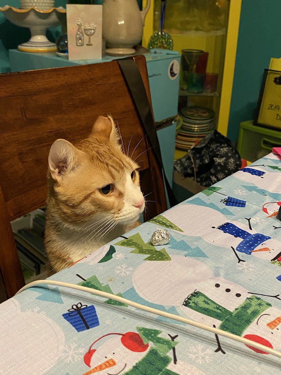 Bevers says there's no room at the table for Little-Larissa-Lies-A-Lot.  #catsjudgingkellyanne