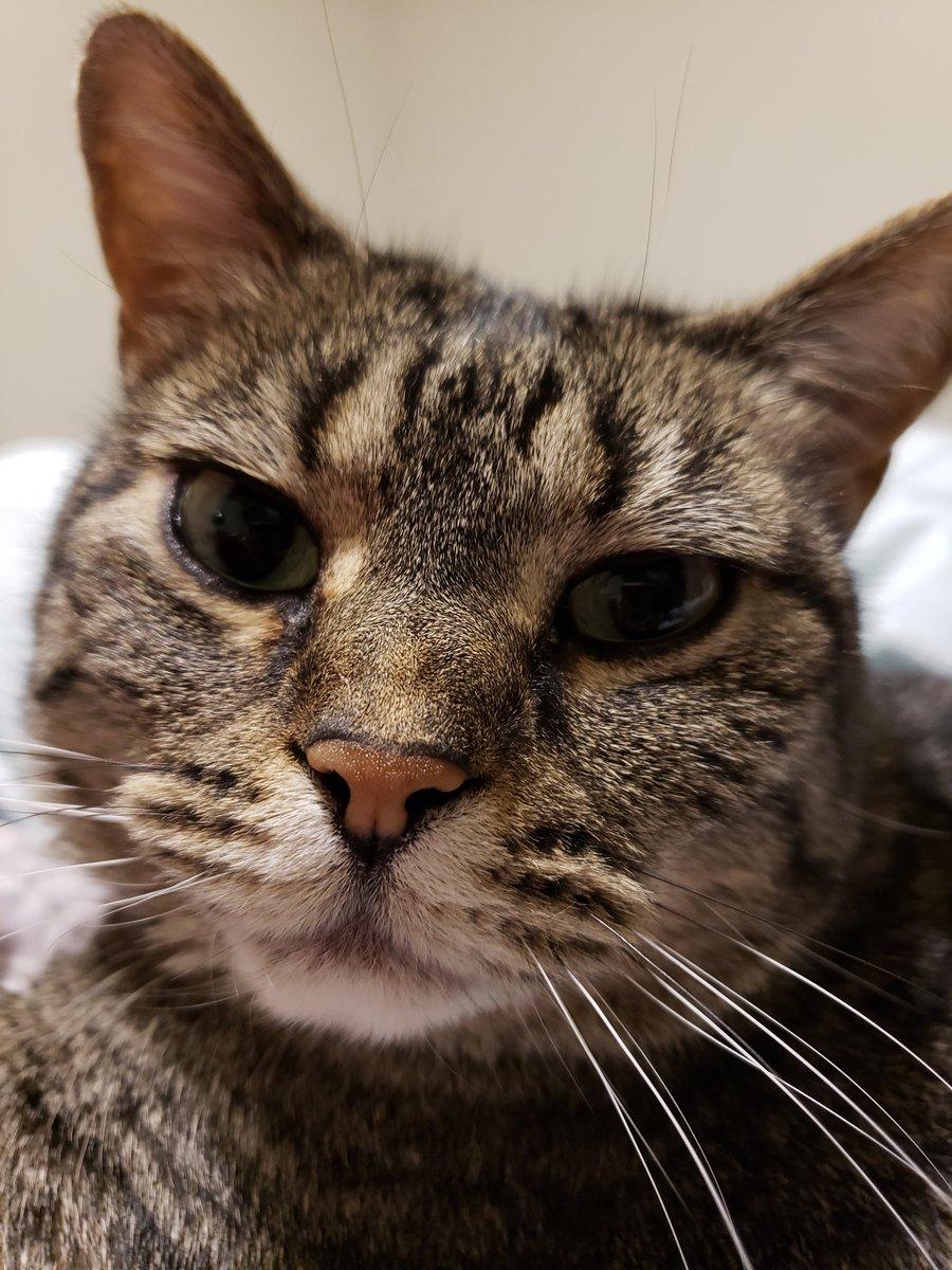 Dolly is most definitely judging ya @KellyannePolls #catsjudgingkellyanne
