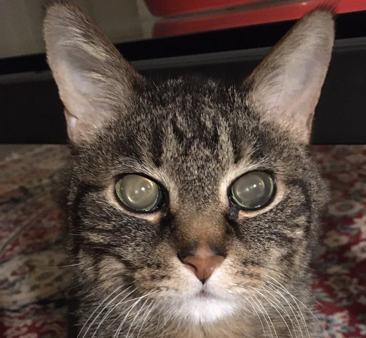 Stanley is watching you Kellyanne.  #catsjudgingkellyanne