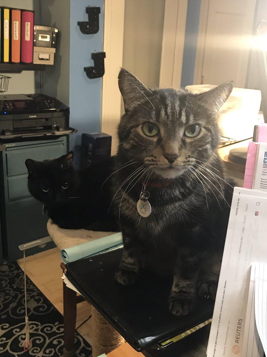 Schatzi and Leopold do not approve #catsjudgingkellyanne