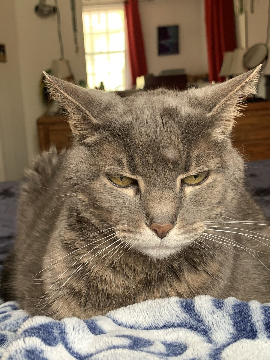 Lulu has been with #catsjudgingkellyanne since she joined this administration!