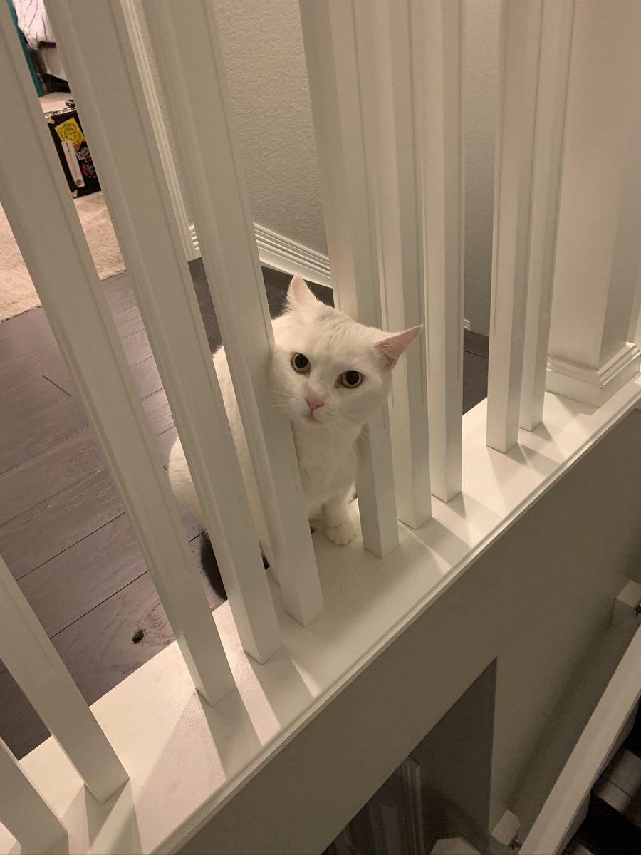Bianca is definitely judging #catsjudgingkellyanne