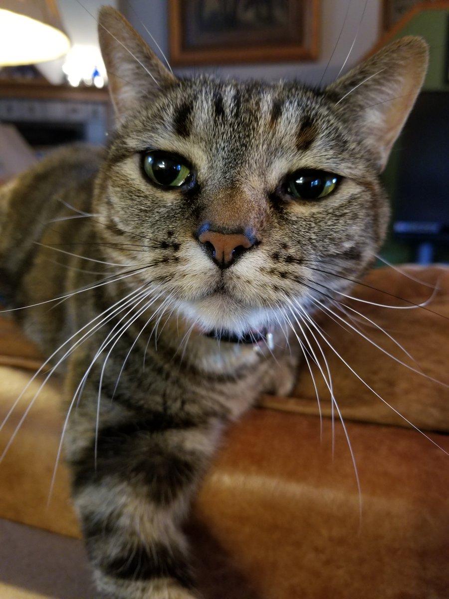 Petal does not approve. #Catsjudgingkellyanne