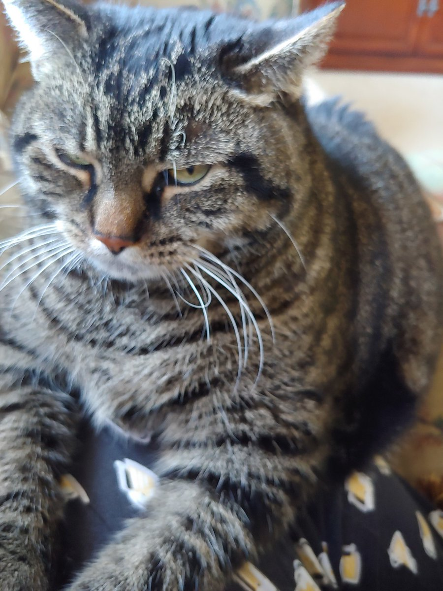Grace Slick isn't a fan #catsjudgingkellyanne