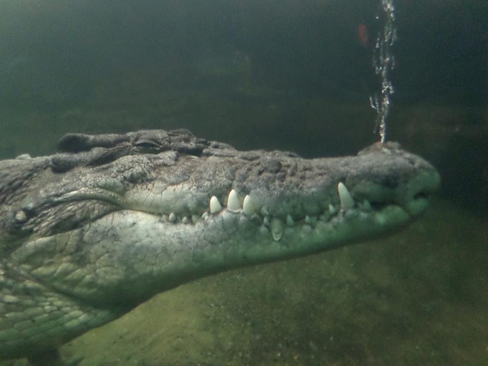 Mr croc is pissed  #catsjudgingkellyanne