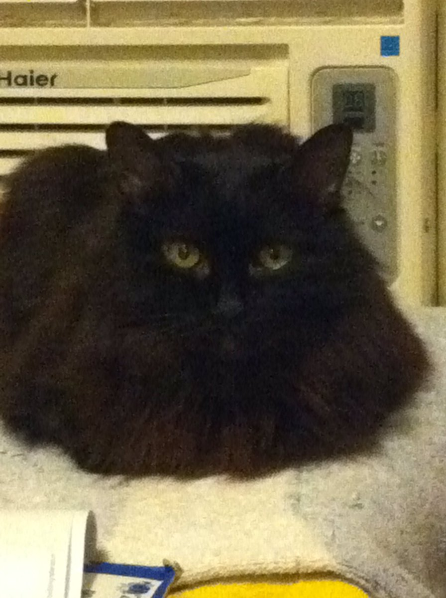 Pyanfar isn't entertaining liars today.  #catsjudgingkellyanne