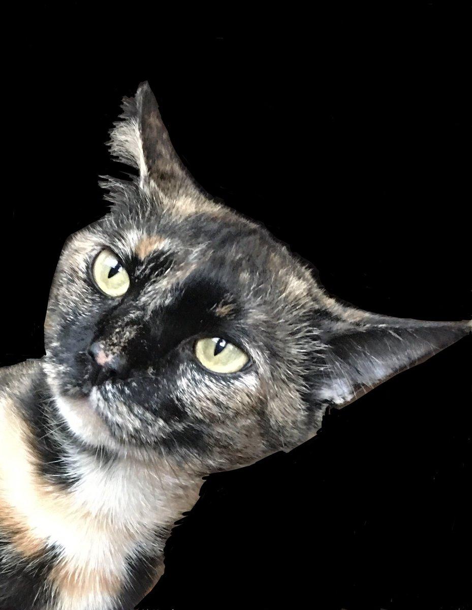 Only 2 more days of alternative facts #catsjudgingkellyanne