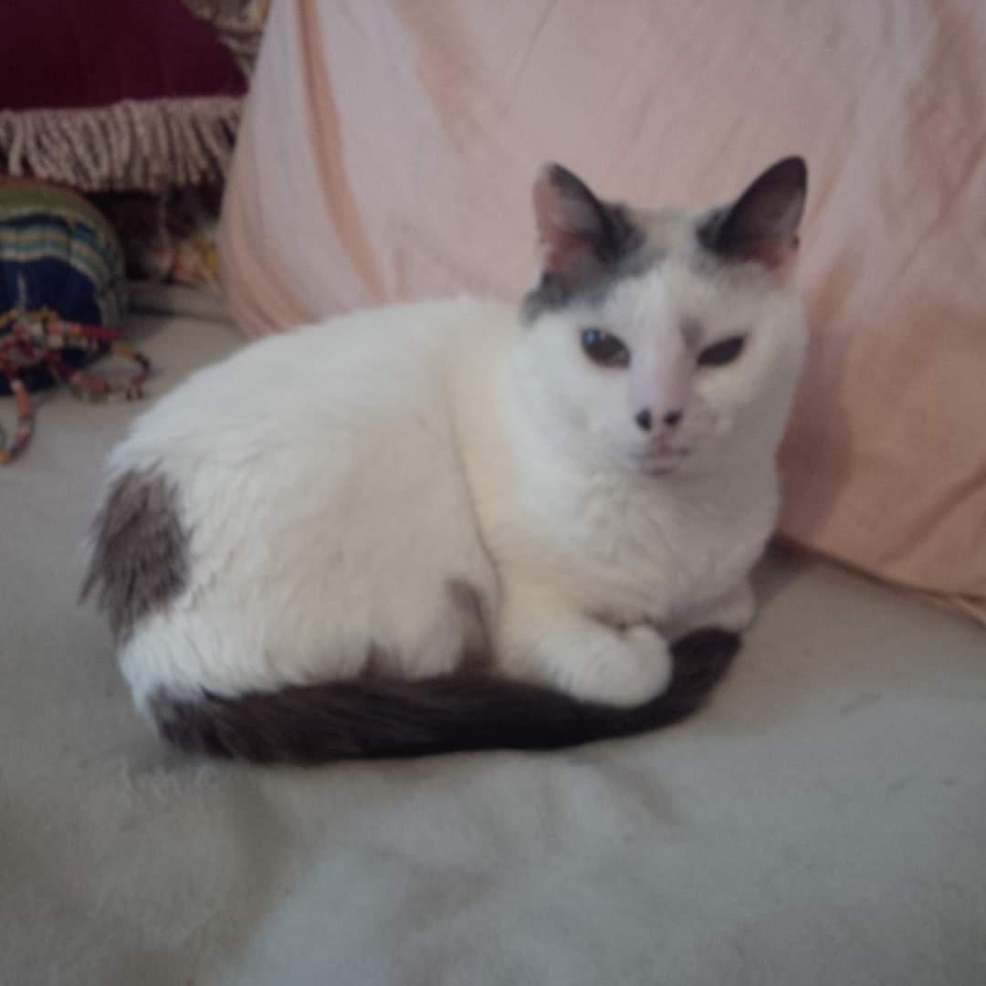 #catsjudgingkellyanne Lucy is giving her the stink eye