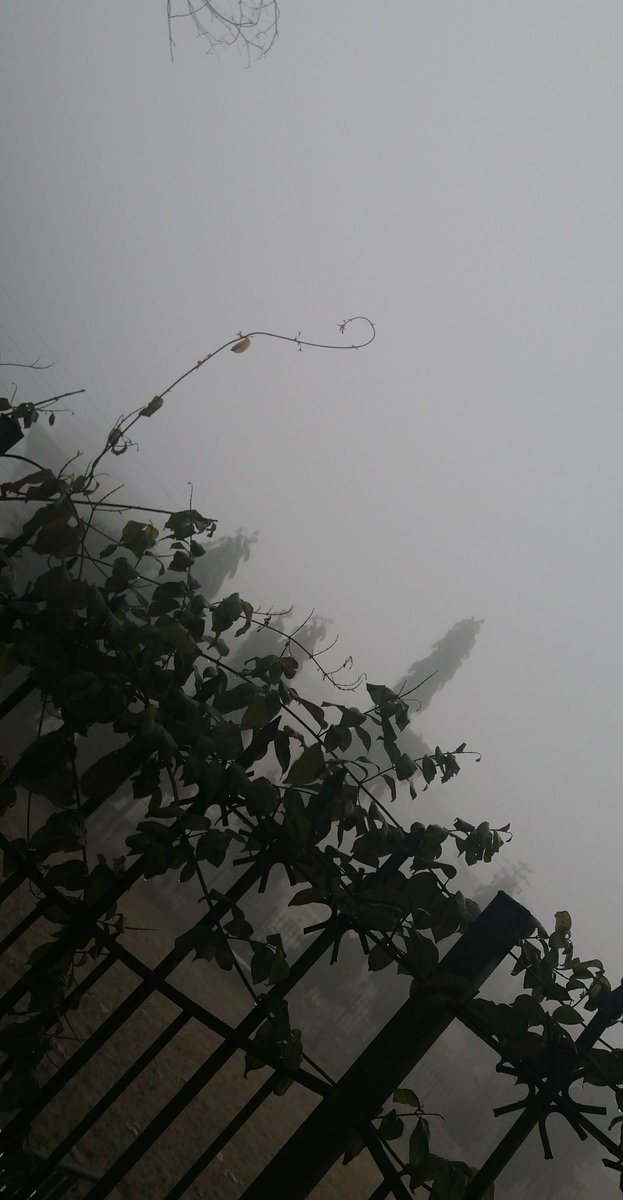 The fog comes  on little cat feet.  It sits looking  over harbor and city  on silent haunches  and then moves on. #poem #winter vibes #isb ❣️❤️❤️❤️
