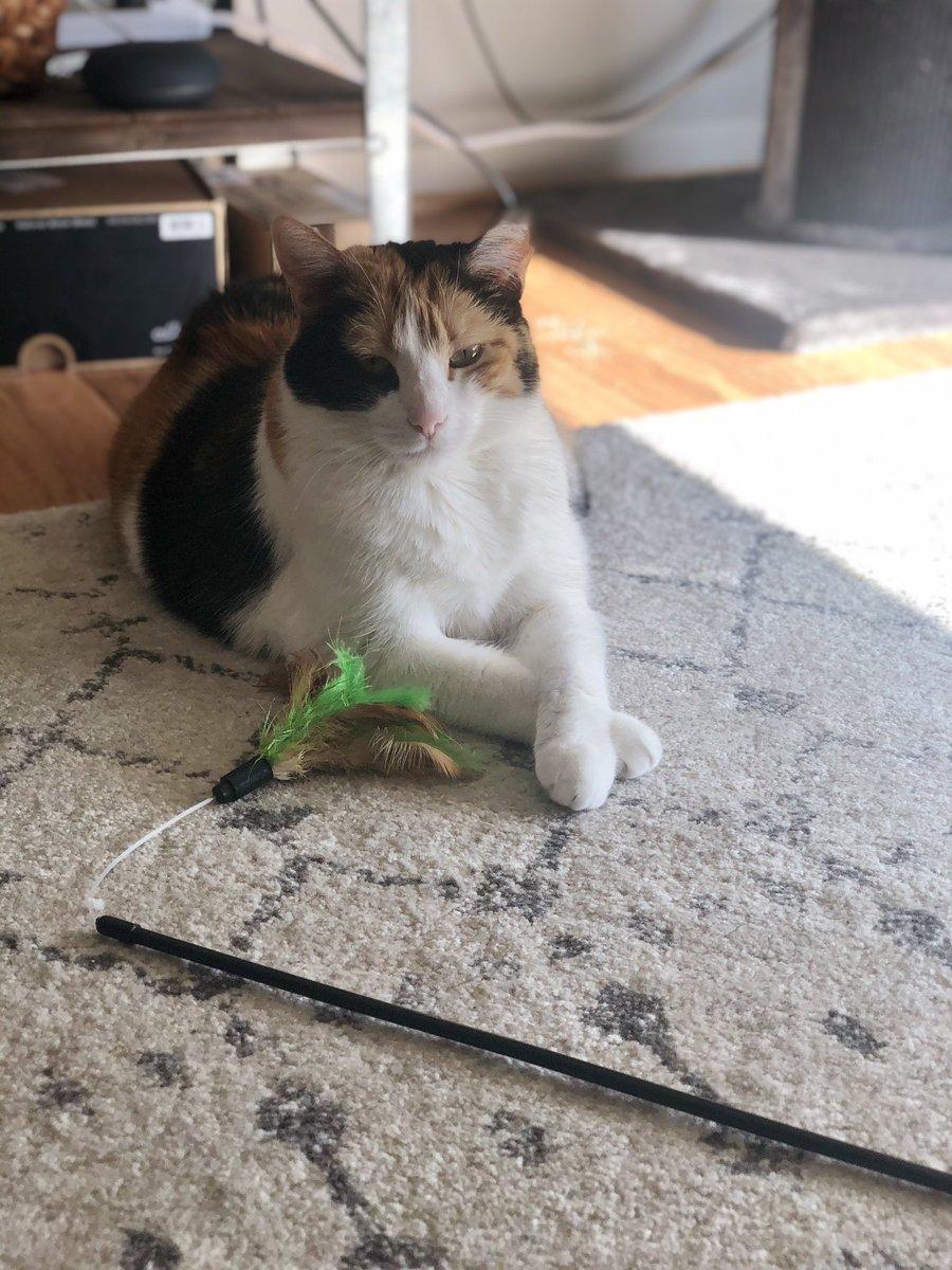 Nova is displeased.  #catsjudgingkellyanne