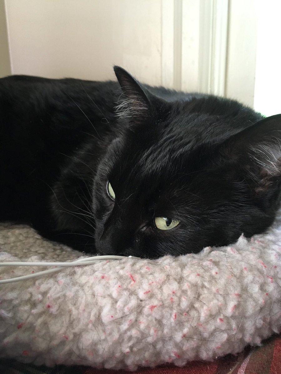 Check out that side-eye! #catsjudgingkellyanne