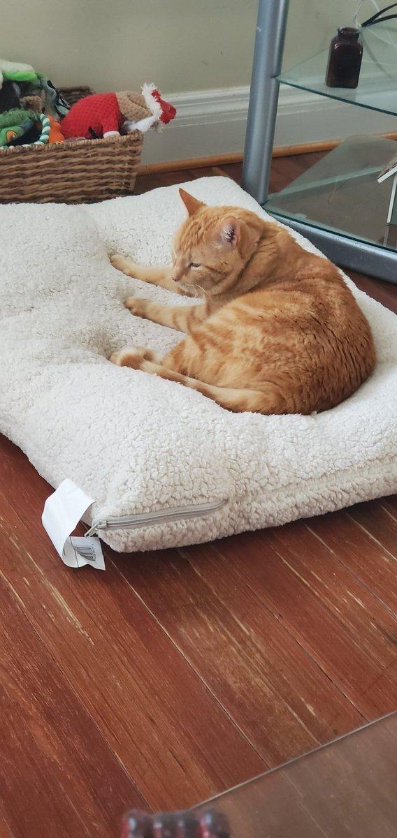 #catsjudgingkellyanne You infuriate me.... lies, lies, lies