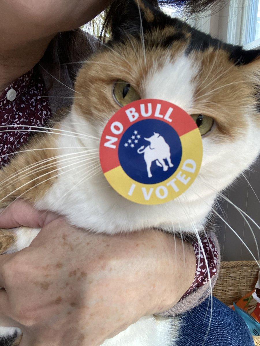 #catsjudgingkellyanne Hazel reminds Kellyanne that she judges and votes!