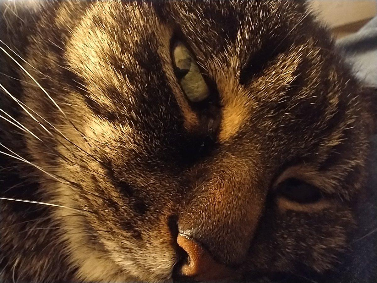 My cat is not amused, ever  #catsjudgingkellyanne