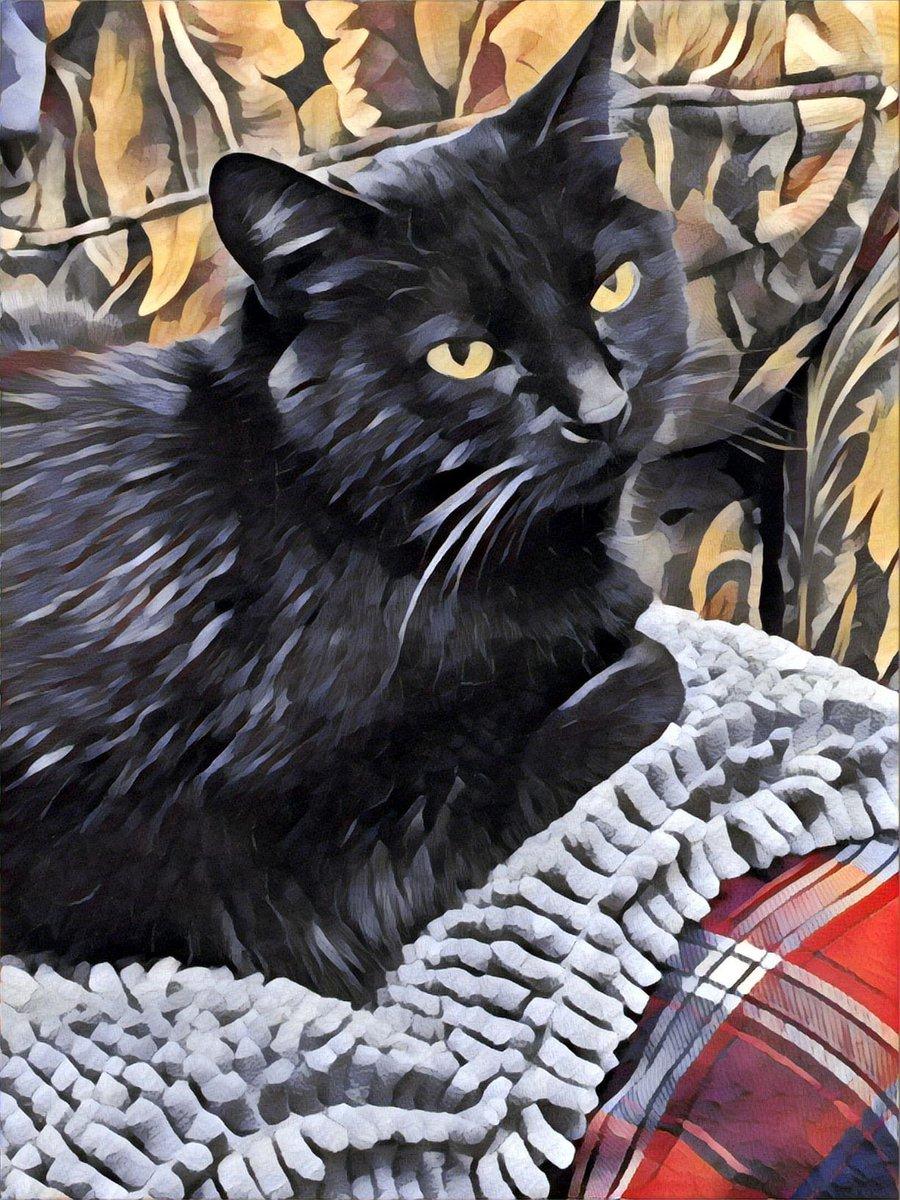 Lovely has judged Kellyanne, and found her lacking. #catsjudgingkellyanne