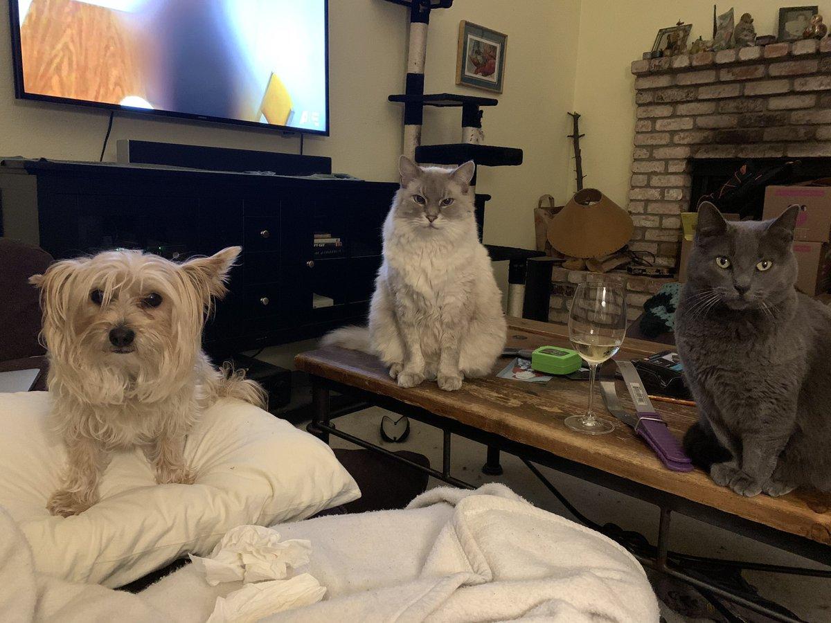#catsjudgingkellyanne Token dog edition.  Trust us, he's judging her too.