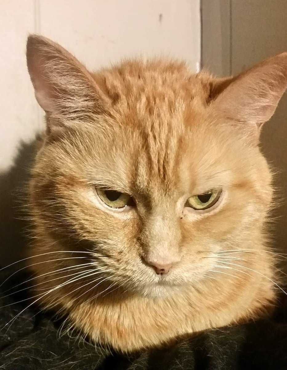 Momo may be gone, but her infamous resting bitch face lives on when it comes to #Catsjudgingkellyanne #momochicken