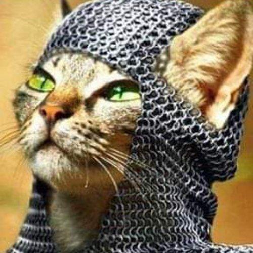 #catsjudgingkellyanne