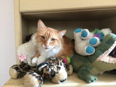 @BitchestheCat @KellyannePolls Judge judge judge #Catsjudgingkellyanne